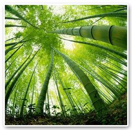 Bambus versus bonsai